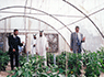 Plant Visit By H.H. Hamad